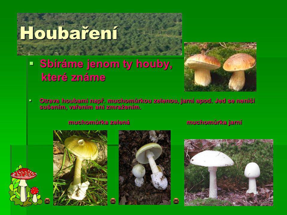 Houbaření  Sbíráme jenom ty houby, které známe které známe  Otrava houbami např.