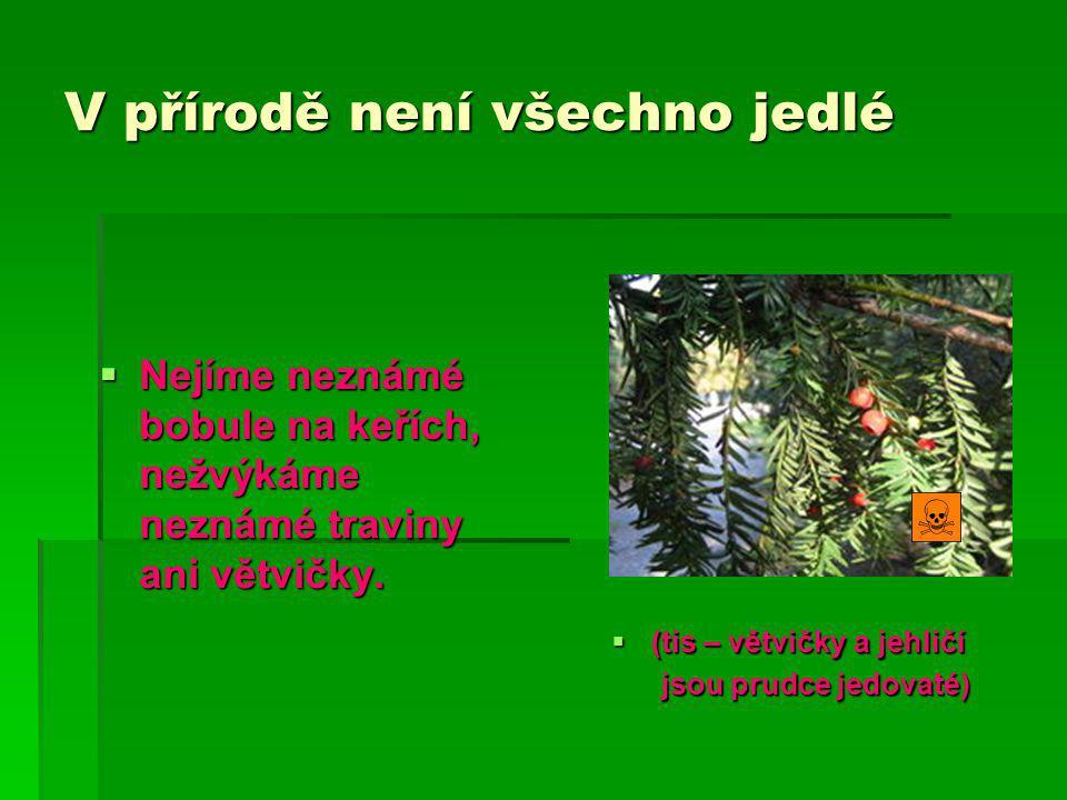 V přírodě není všechno jedlé  Nejíme neznámé bobule na keřích, nežvýkáme neznámé traviny ani větvičky.
