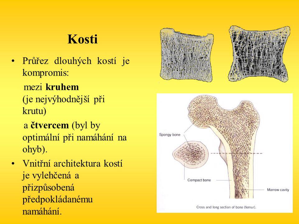 Průřez dlouhých kostí je kompromis: mezi kruhem (je nejvýhodnější při krutu) a čtvercem (byl by optimální při namáhání na ohyb). Vnitřní architektura