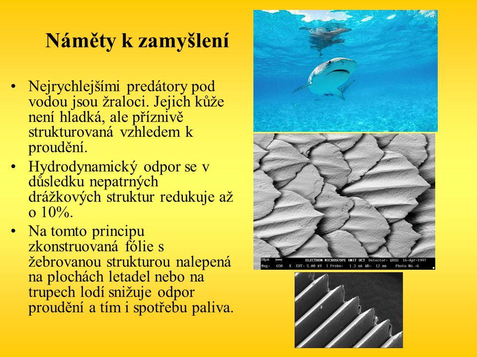 Náměty k zamyšlení Nejrychlejšími predátory pod vodou jsou žraloci. Jejich kůže není hladká, ale příznivě strukturovaná vzhledem k proudění. Hydrodyna
