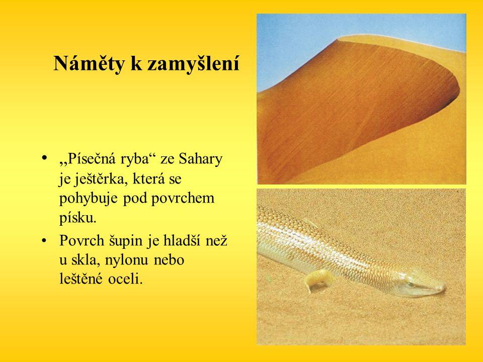 """Náměty k zamyšlení """" Písečná ryba"""" ze Sahary je ještěrka, která se pohybuje pod povrchem písku. Povrch šupin je hladší než u skla, nylonu nebo leštěné"""