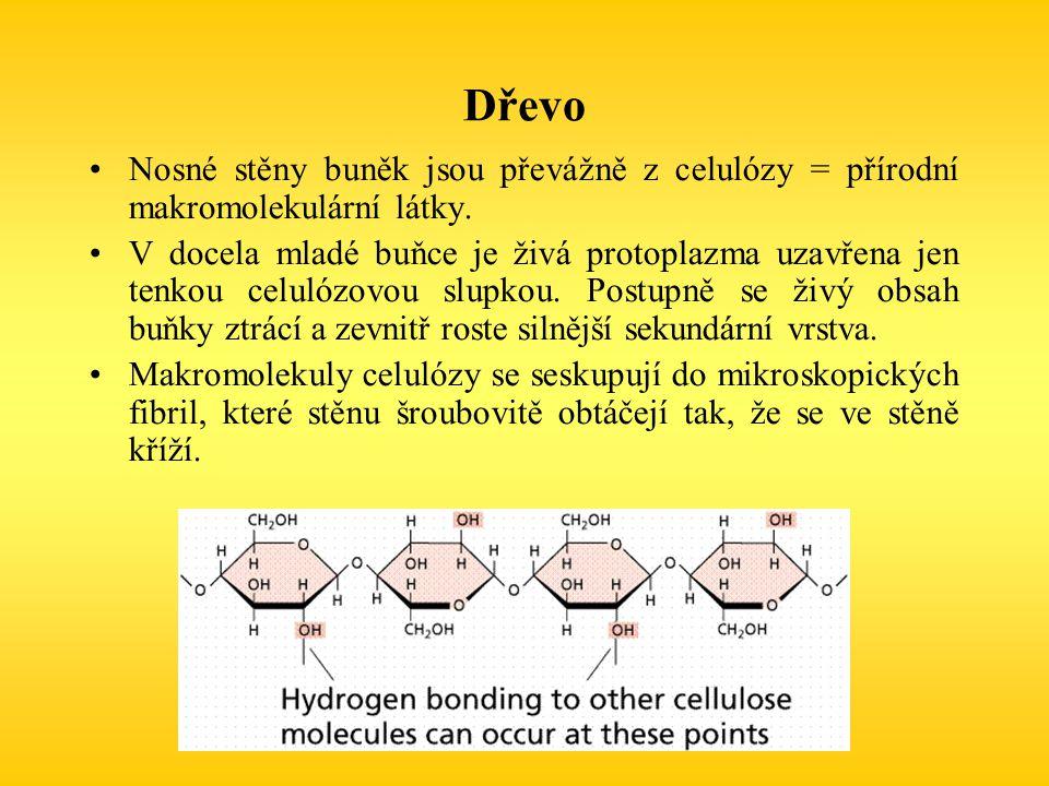 Dřevo Nosné stěny buněk jsou převážně z celulózy = přírodní makromolekulární látky. V docela mladé buňce je živá protoplazma uzavřena jen tenkou celul