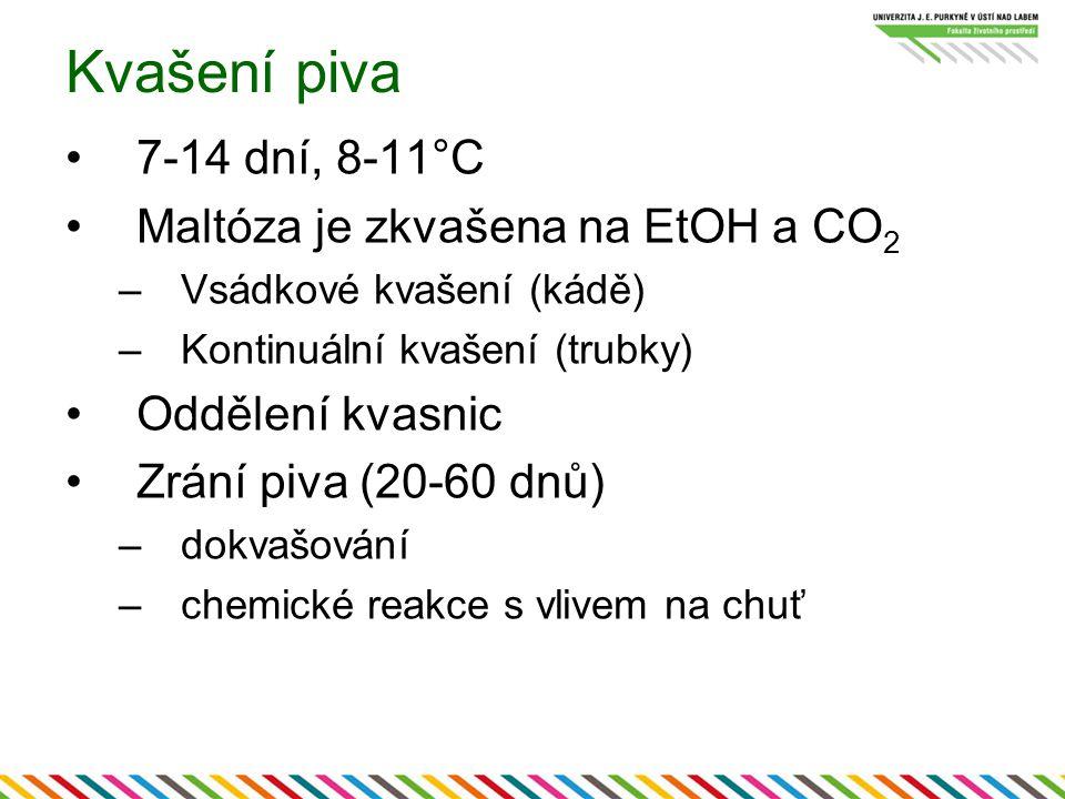 Kvašení piva 7-14 dní, 8-11°C Maltóza je zkvašena na EtOH a CO 2 –Vsádkové kvašení (kádě) –Kontinuální kvašení (trubky) Oddělení kvasnic Zrání piva (20-60 dnů) –dokvašování –chemické reakce s vlivem na chuť
