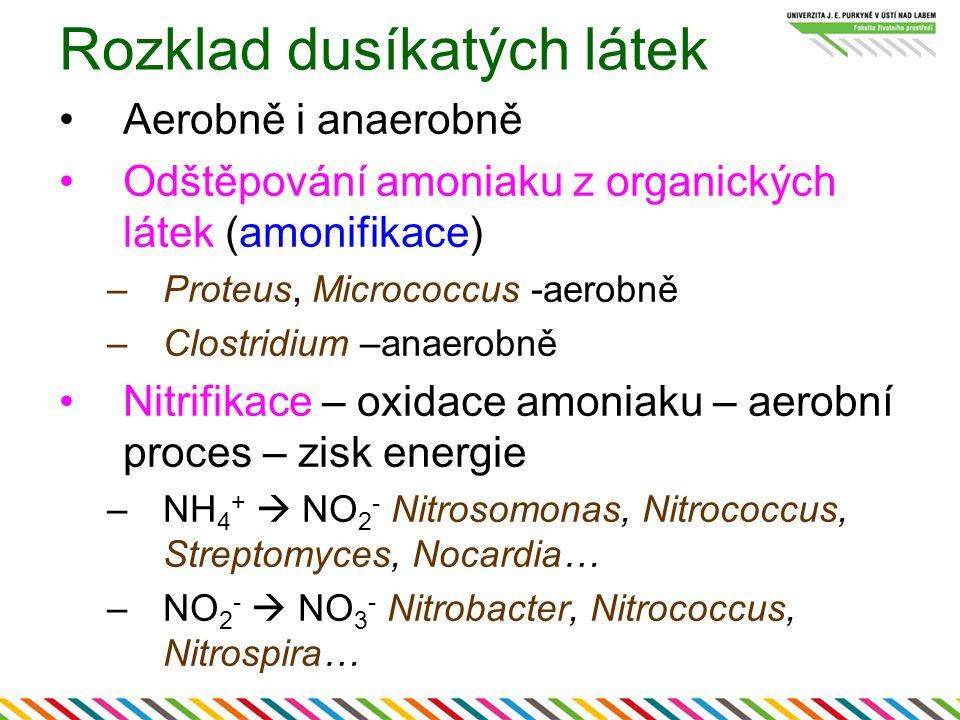 Rozklad dusíkatých látek Aerobně i anaerobně Odštěpování amoniaku z organických látek (amonifikace) –Proteus, Micrococcus -aerobně –Clostridium –anaerobně Nitrifikace – oxidace amoniaku – aerobní proces – zisk energie –NH 4 +  NO 2 - Nitrosomonas, Nitrococcus, Streptomyces, Nocardia… –NO 2 -  NO 3 - Nitrobacter, Nitrococcus, Nitrospira…
