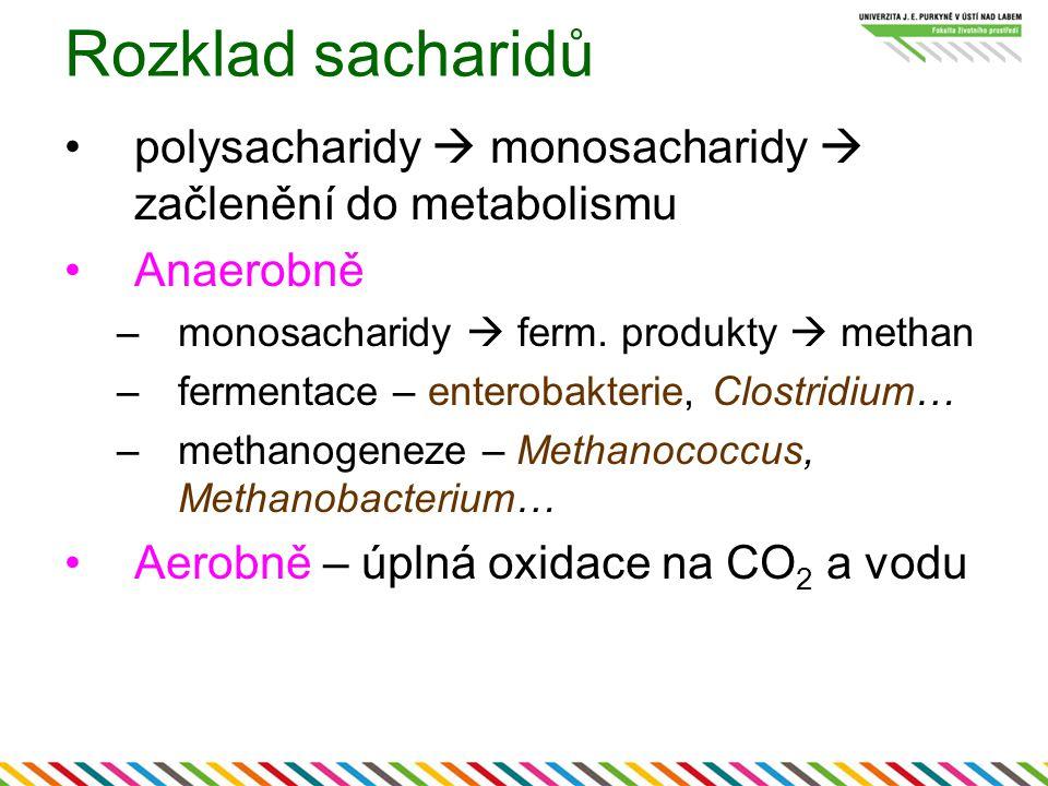 Rozklad sacharidů polysacharidy  monosacharidy  začlenění do metabolismu Anaerobně –monosacharidy  ferm.