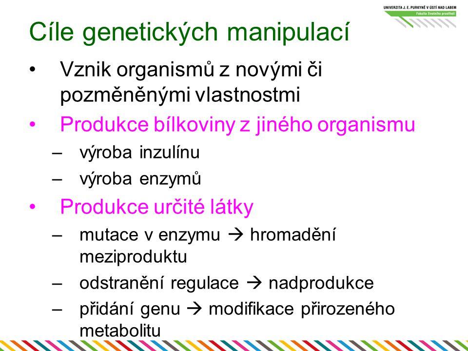 Cíle genetických manipulací Vznik organismů z novými či pozměněnými vlastnostmi Produkce bílkoviny z jiného organismu –výroba inzulínu –výroba enzymů Produkce určité látky –mutace v enzymu  hromadění meziproduktu –odstranění regulace  nadprodukce –přidání genu  modifikace přirozeného metabolitu