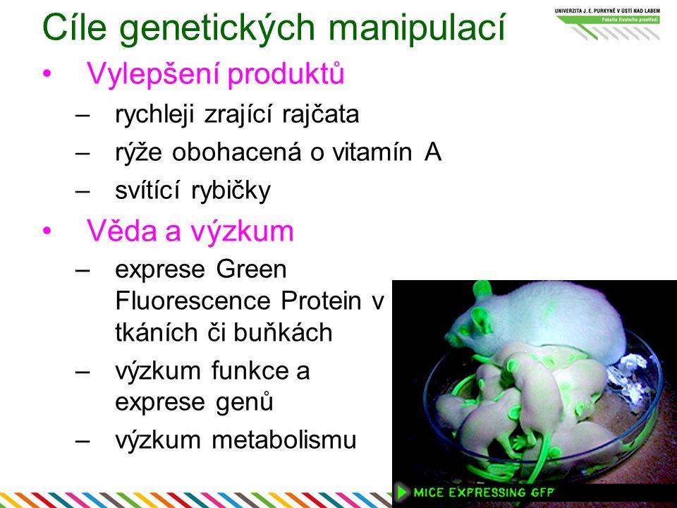 Cíle genetických manipulací Vylepšení produktů –rychleji zrající rajčata –rýže obohacená o vitamín A –svítící rybičky Věda a výzkum –exprese Green Fluorescence Protein v tkáních či buňkách –výzkum funkce a exprese genů –výzkum metabolismu