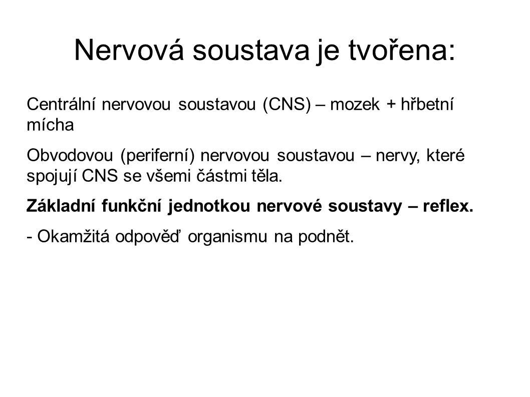 Nervová soustava je tvořena: Centrální nervovou soustavou (CNS) – mozek + hřbetní mícha Obvodovou (periferní) nervovou soustavou – nervy, které spojuj