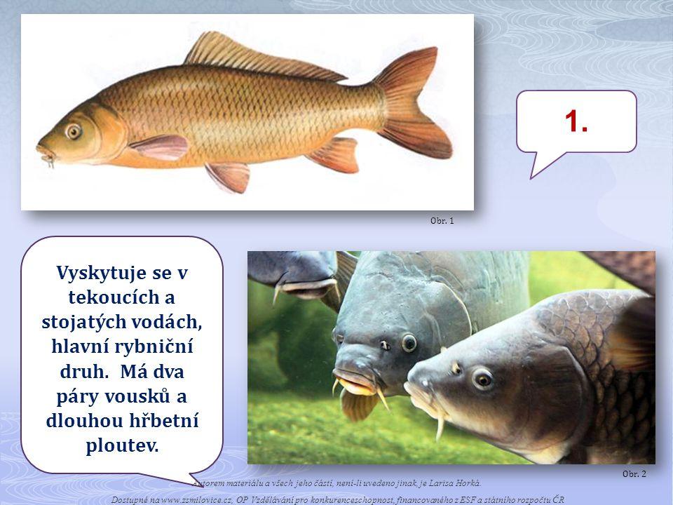 1.Vyskytuje se v tekoucích a stojatých vodách, hlavní rybniční druh.