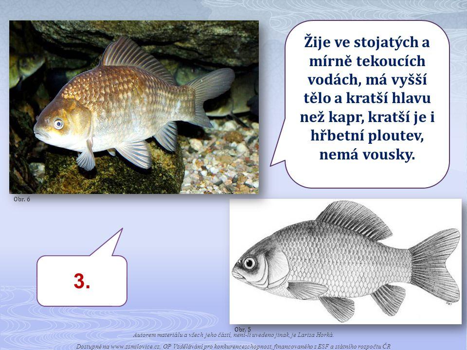 4.Žije ve stojatých a mírně tekoucích vodách.