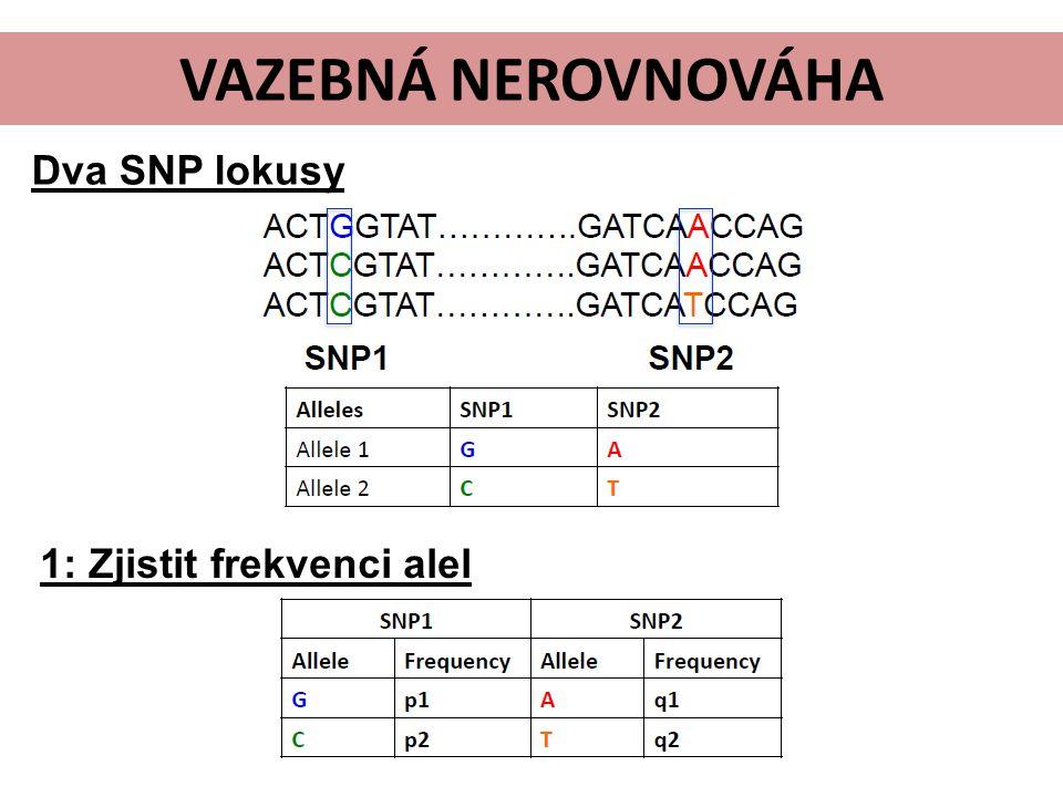 Dva SNP lokusy 1: Zjistit frekvenci alel