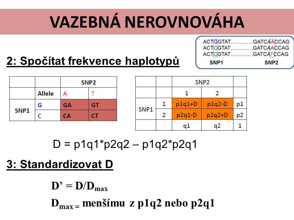VAZEBNÁ NEROVNOVÁHA 2: Spočítat frekvence haplotypů D = p1q1*p2q2 – p1q2*p2q1 D max = menšímu z p1q2 nebo p2q1 3: Standardizovat D
