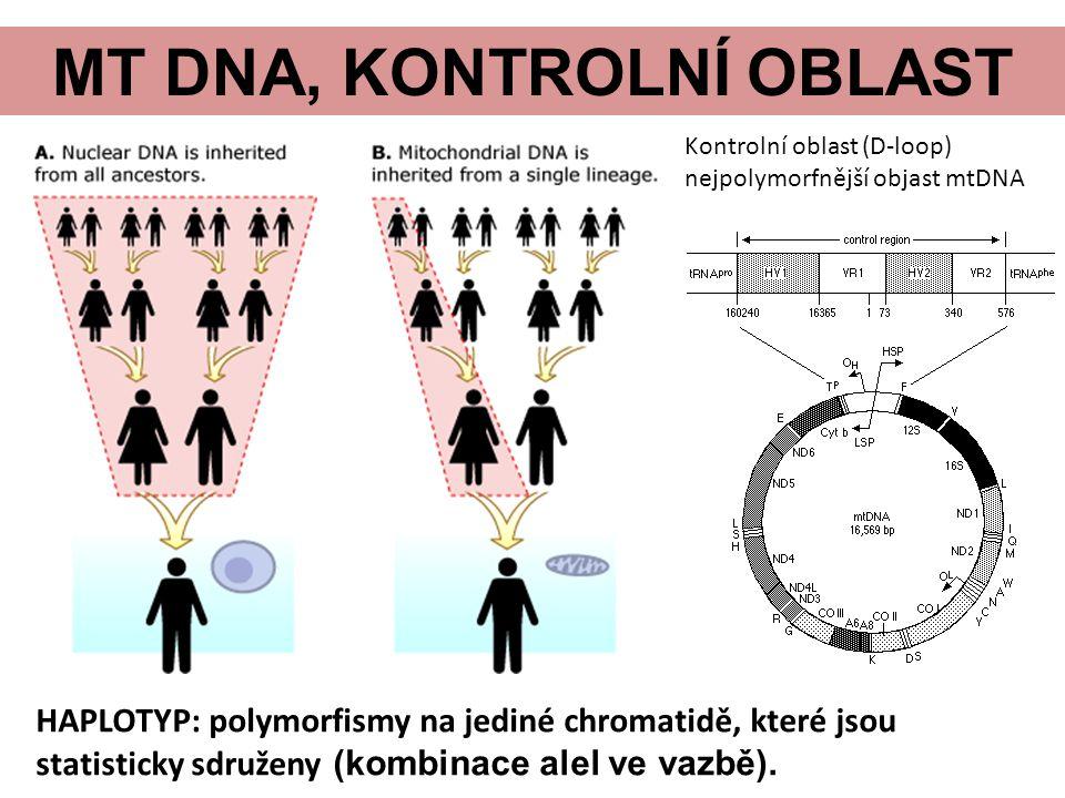MT DNA, KONTROLNÍ OBLAST HAPLOTYP: polymorfismy na jediné chromatidě, které jsou statisticky sdruženy (kombinace alel ve vazbě).