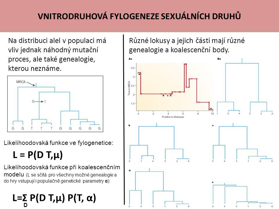 VNITRODRUHOVÁ FYLOGENEZE SEXUÁLNÍCH DRUHŮ Na distribuci alel v populaci má vliv jednak náhodný mutační proces, ale také genealogie, kterou neznáme.
