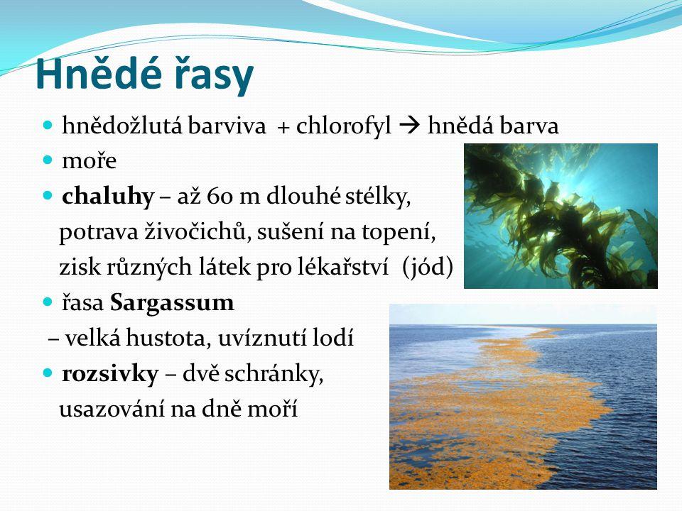 Hnědé řasy hnědožlutá barviva + chlorofyl  hnědá barva moře chaluhy – až 60 m dlouhé stélky, potrava živočichů, sušení na topení, zisk různých látek