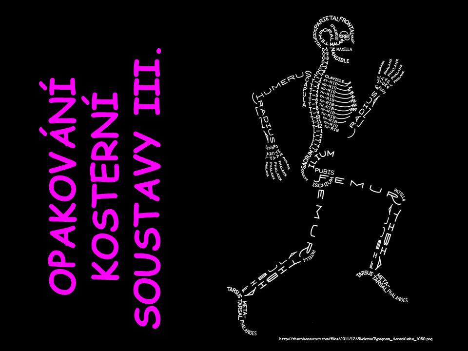 OPAKOVÁNÍ KOSTERNÍ SOUSTAVY III. http://therohanaurora.com/files/2011/12/SkeletonTypogram_AaronKuehn_1080.png