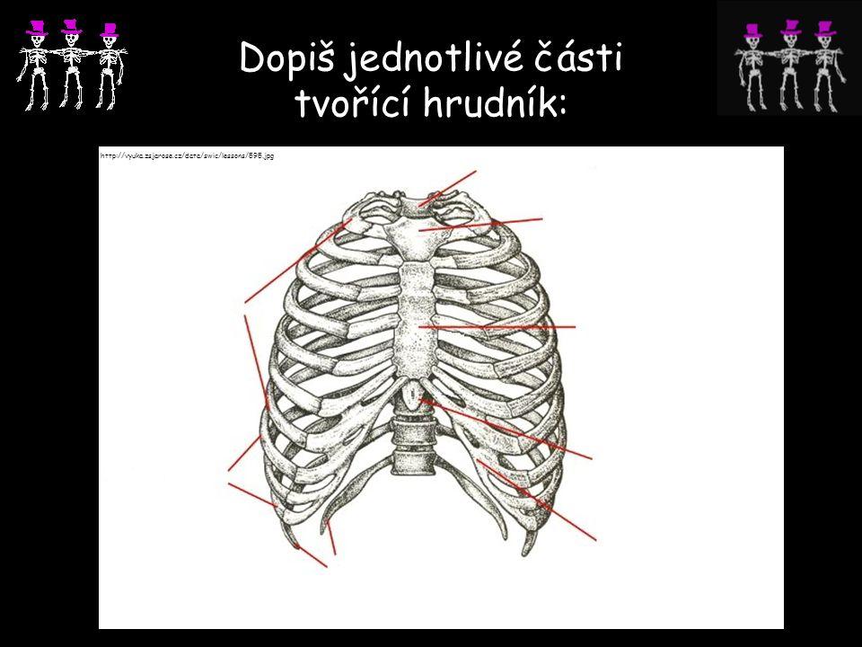 Dopiš jednotlivé části tvořící hrudník: http://vyuka.zsjarose.cz/data/swic/lessons/595.jpg