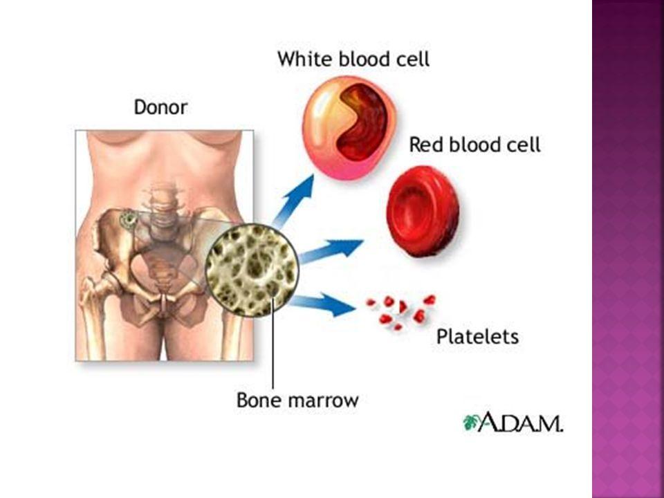  Sítě retikulárních vláken červené kostní dřeně jsou postupně nahrazovány tukovými buňkami  Jedná se v podstatě o tukové vazivo  Vyplňuje téměř všechny dřeňové dutiny všech kostí  Ve vysokém věku je nahrazována šedou kostní dření – vazivo, které zůstává po ztrátě tukových buněk