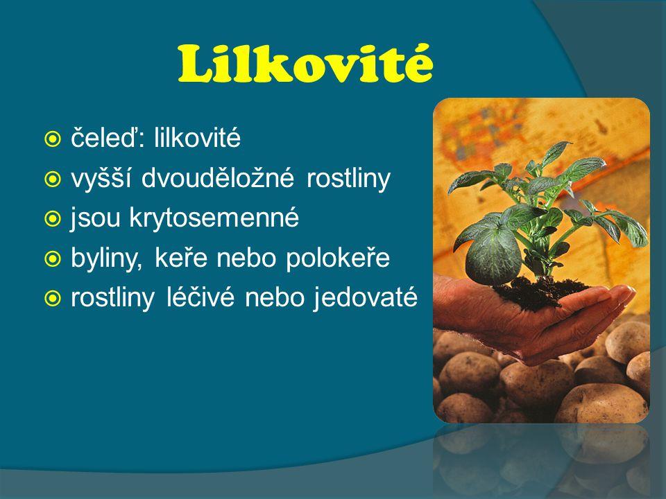 Lilkovité  čeleď: lilkovité  vyšší dvouděložné rostliny  jsou krytosemenné  byliny, keře nebo polokeře  rostliny léčivé nebo jedovaté