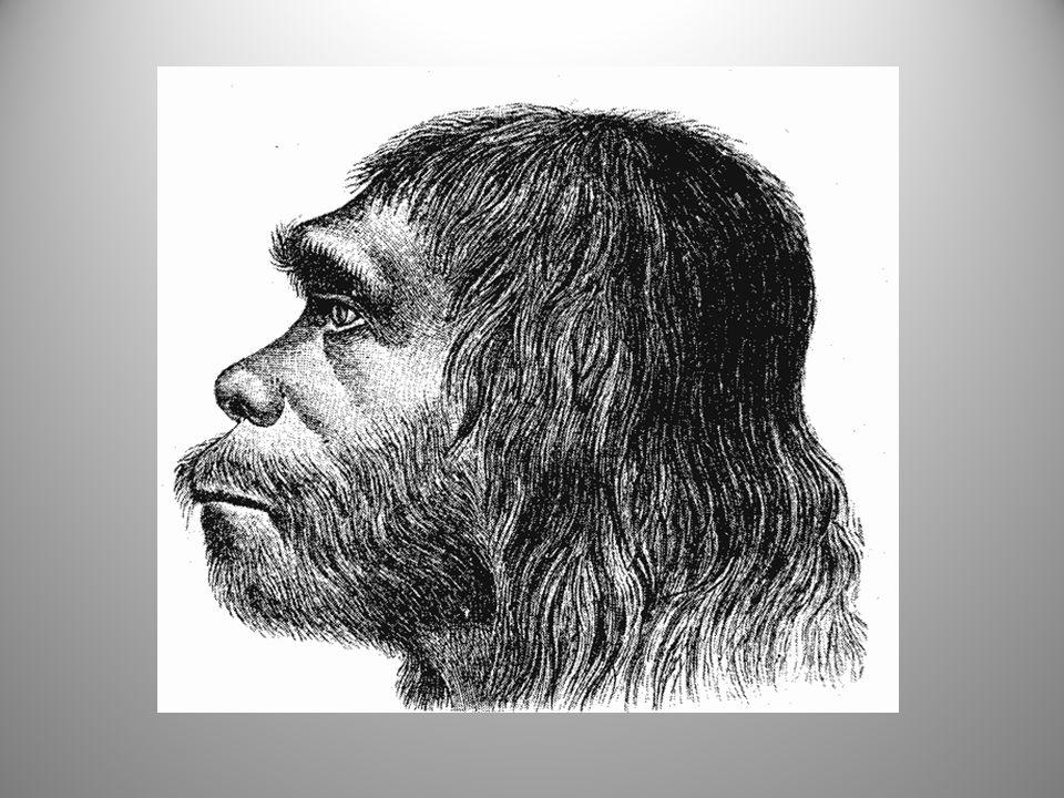 Lebka homo sapiens