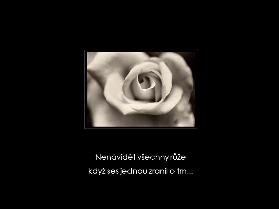 Nenávidět všechny růže když ses jednou zranil o trn...