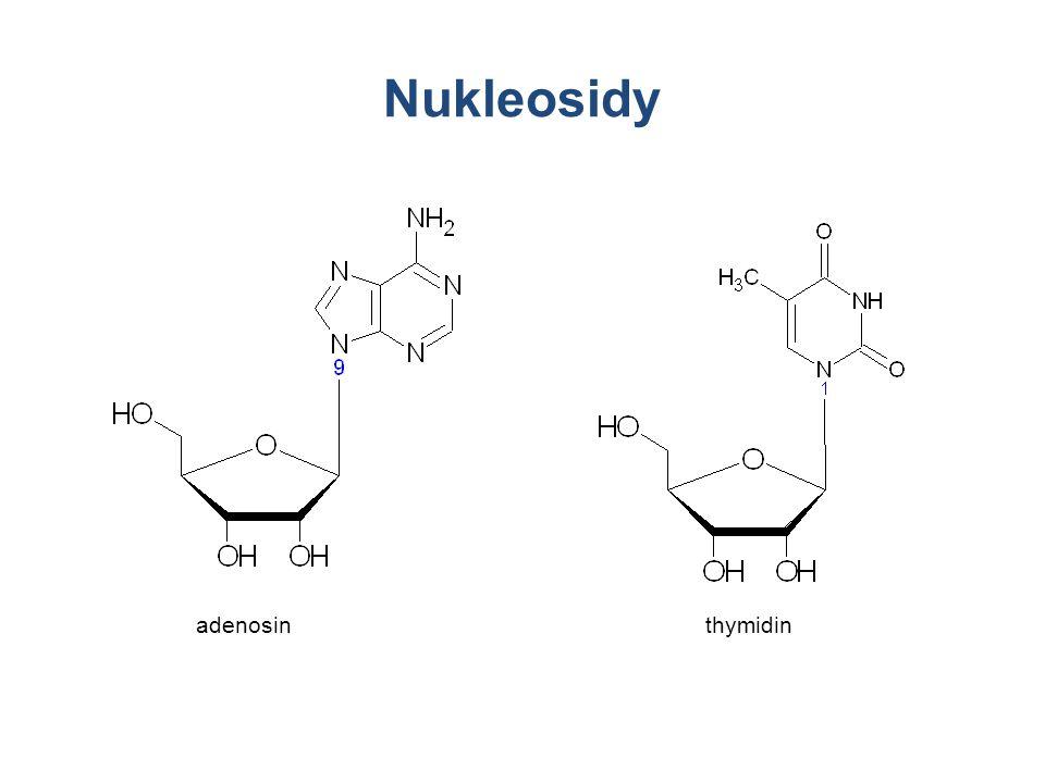 Nukleosidy adenosinthymidin