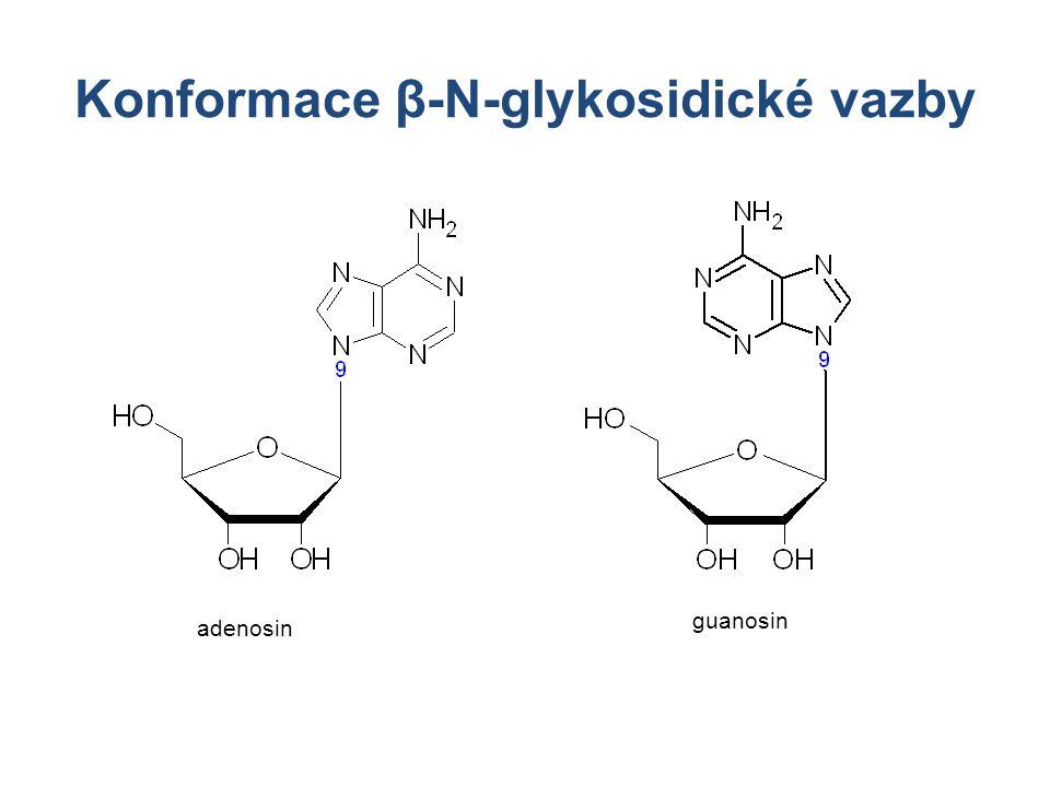 Konformace β-N-glykosidické vazby adenosin guanosin