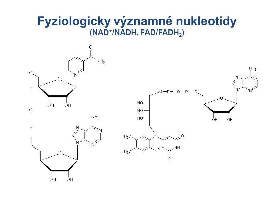 Fyziologicky významné nukleotidy (NAD + /NADH, FAD/FADH 2 )