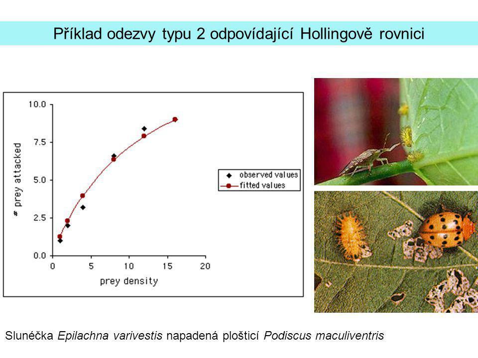 Slunéčka Epilachna varivestis napadená plošticí Podiscus maculiventris Příklad odezvy typu 2 odpovídající Hollingově rovnici