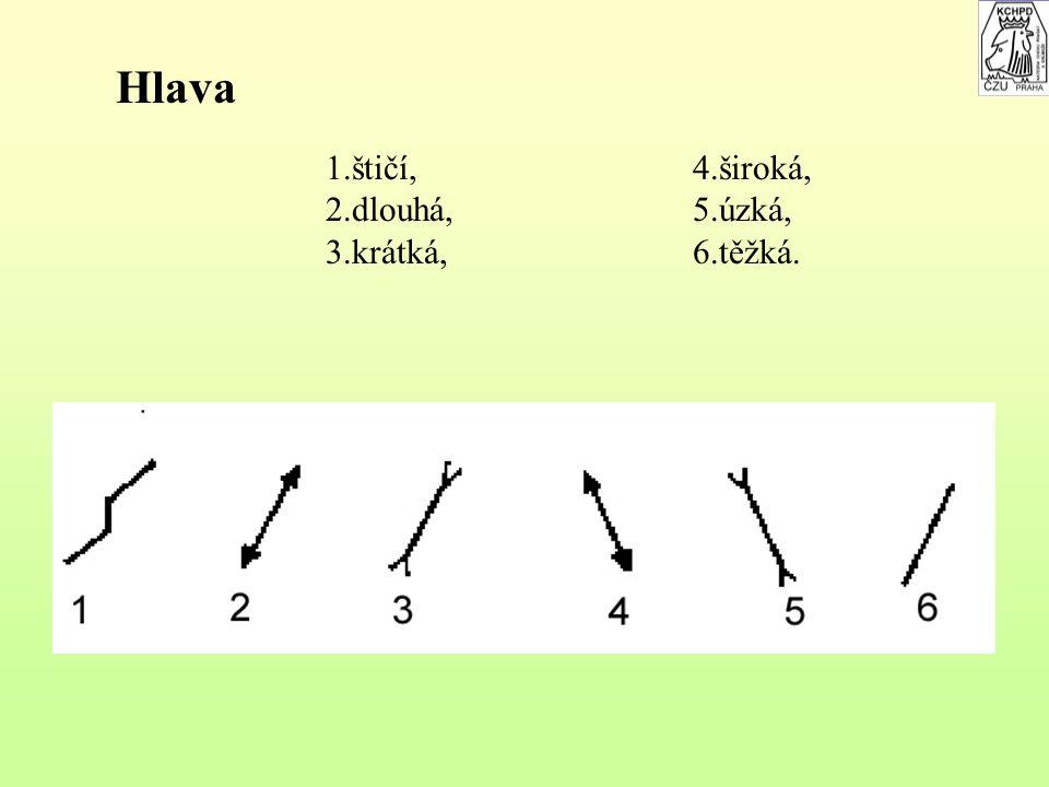 Značky na vyjádření celkového vývinu těla, nebo některých částí 1.dlouhý, 2.krátký, 3.hluboký a široký, 4.plytký a úzký, 5.vysoký, 6.nízký, 7.jemný, u