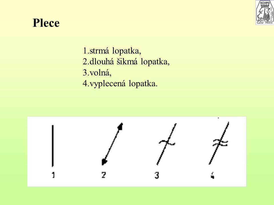 Hrudník 1.hluboký, 2.mělký, 3.zaškrcený za lopatkou, 4.plochý, 5.úzký, 6.široký klenutý, 7.prázdný v srdeční krajině.