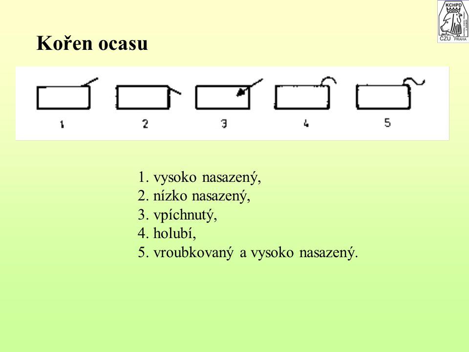 Kříž při pohledu zezadu 1.široký, 2.úzký, 3.střechovitý, 4.oválný, 5.rohatý, 6.rozštěpený, 7.zúžený.