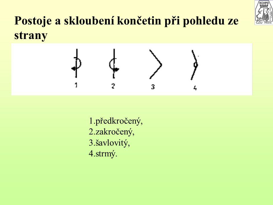 Postoje a postavení končetin při pohledu zepředu a zezadu 1.úzký, 2.široký, 3.sbíhavý, 4.rozbíhavý, 5.vbočený, 6.sevřený, 7.francouzský, 8.kravský, 9.