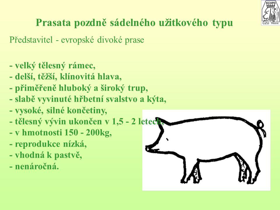Prasata pozdně sádelného užitkového typu Představitel - evropské divoké prase - velký tělesný rámec, - delší, těžší, klínovitá hlava, - přiměřeně hluboký a široký trup, - slabě vyvinuté hřbetní svalstvo a kýta, - vysoké, silné končetiny, - tělesný vývin ukončen v 1,5 - 2 letech, - v hmotnosti 150 - 200kg, - reprodukce nízká, - vhodná k pastvě, - nenáročná.