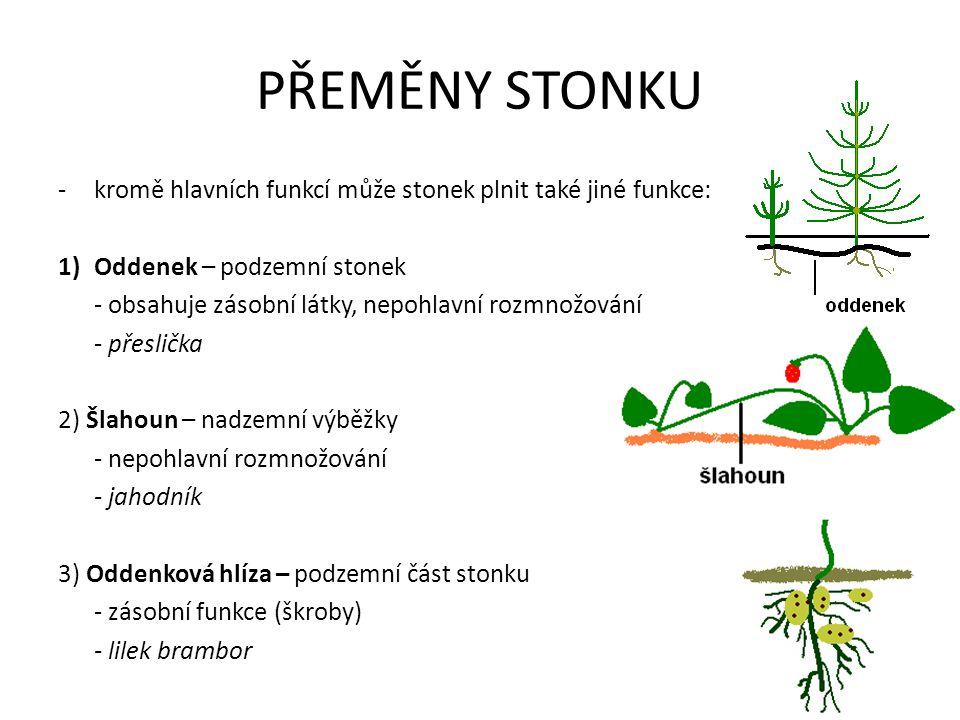 PŘEMĚNY STONKU -kromě hlavních funkcí může stonek plnit také jiné funkce: 1)Oddenek – podzemní stonek - obsahuje zásobní látky, nepohlavní rozmnožován