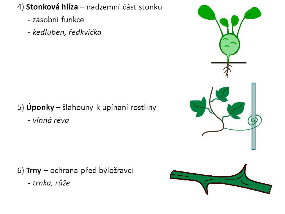 4) Stonková hlíza – nadzemní část stonku - zásobní funkce - kedluben, ředkvička 5) Úponky – šlahouny k upínaní rostliny - vinná réva 6) Trny – ochrana