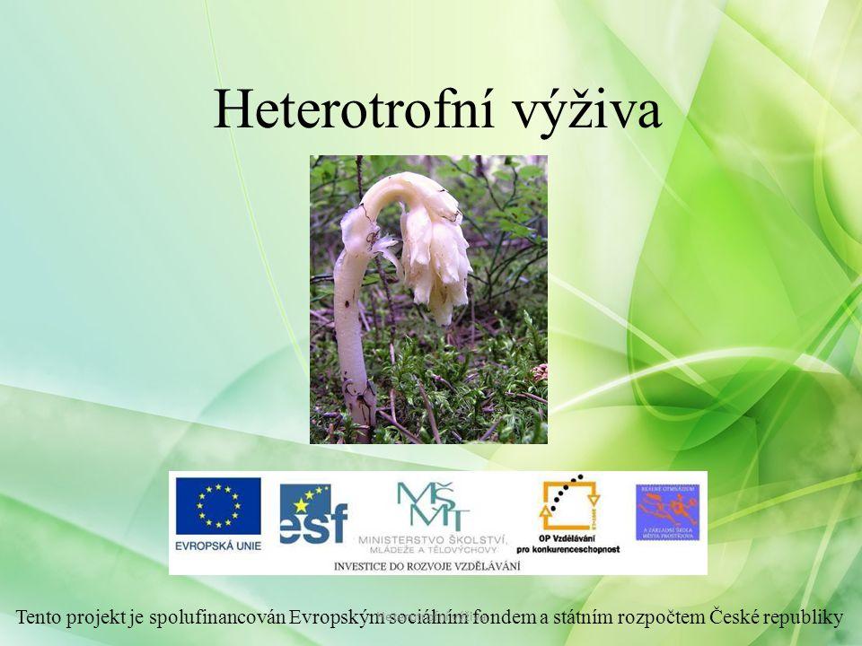 - hlízkové bakterie + bobovité rostliny - mykorhiza – symbioza mezi vyššími rostlinami + podhoubím hub Heterotrofní výživa