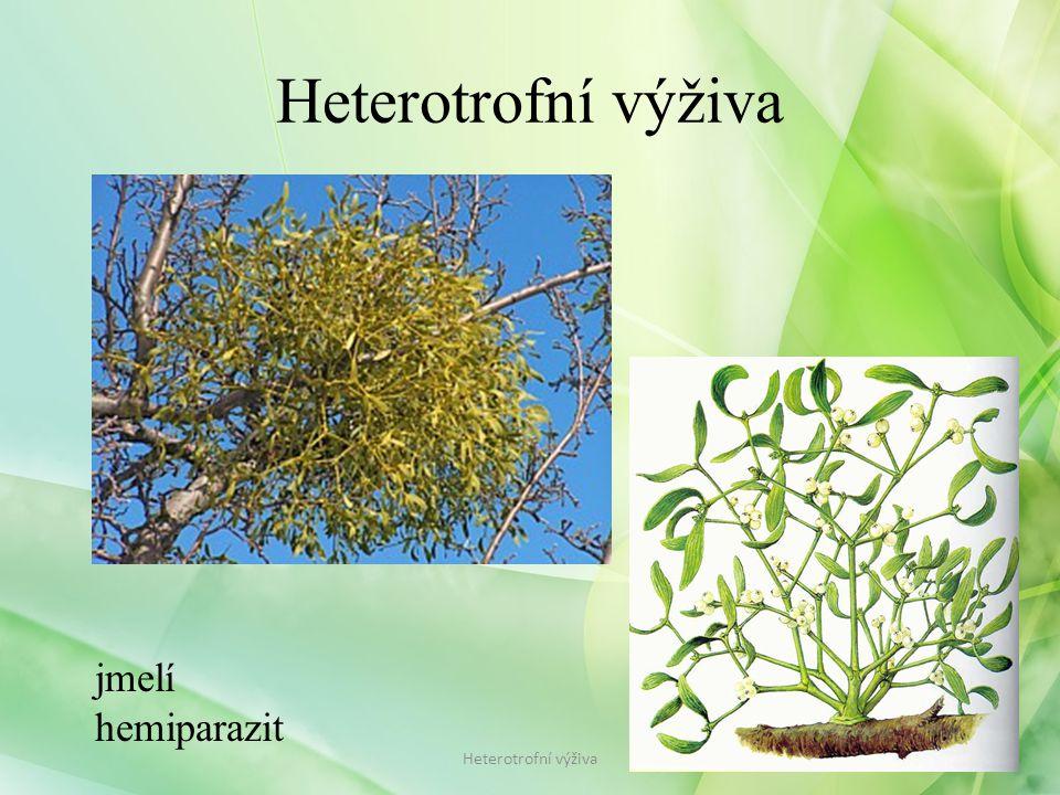 jmelí hemiparazit Heterotrofní výživa
