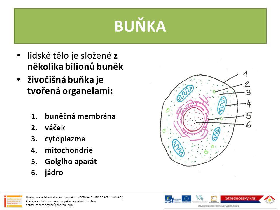 TYPY BUNĚK KMENOVÉ BUŇKY (1) – buňky schopné se přeměnit v jiný typ buněk – nervové buňky (2) – červené krvinky (3) – bílé krvinky (4) – tukové buňky (5) – kožní buňky (6) – svalové buňky (7) – kostní buňky (8) Učební materiál vznikl v rámci projektu INFORMACE – INSPIRACE – INOVACE, který je spolufinancován Evropským sociálním fondem a státním rozpočtem České republiky.