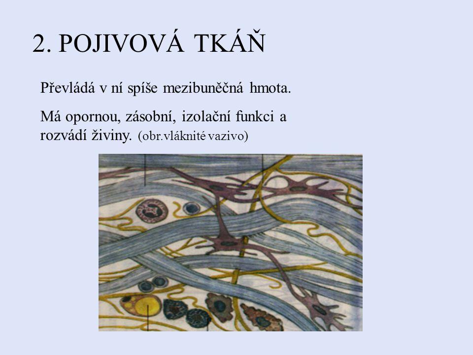1.EPITELOVÁ TKÁŇ Pokrývá vnější i vnitřní povrch.