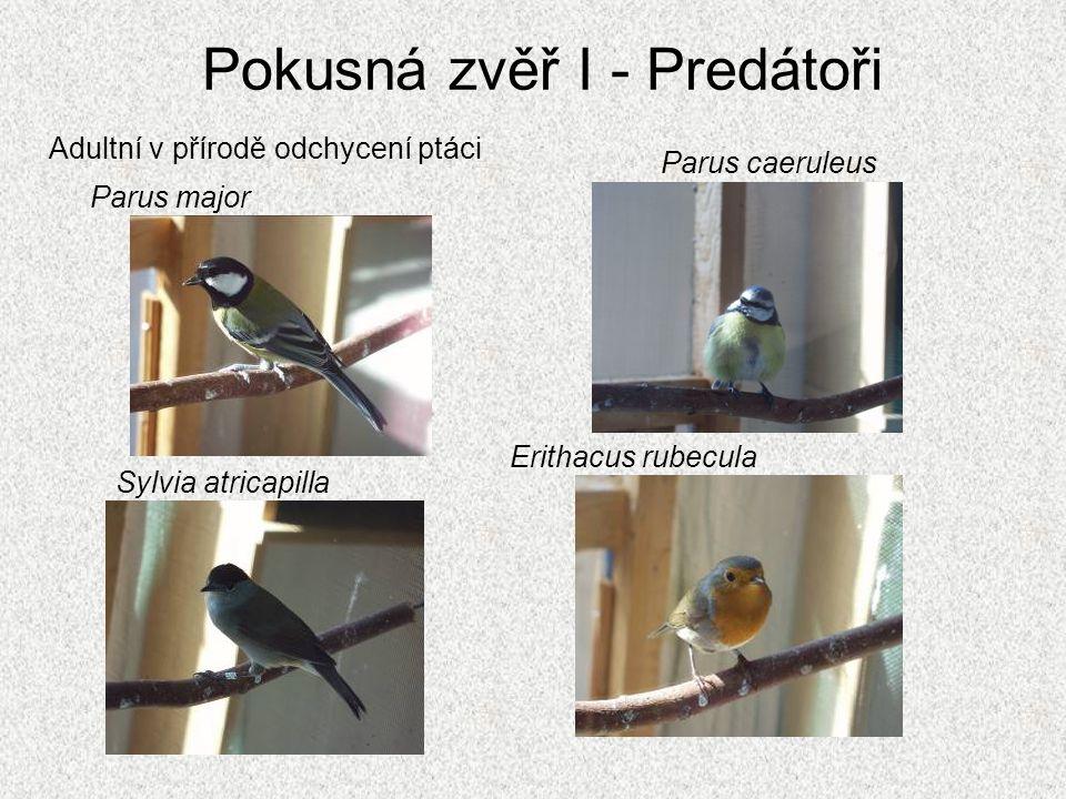 Pokusná zvěř I - Predátoři Adultní v přírodě odchycení ptáci Parus caeruleus Sylvia atricapilla Erithacus rubecula Parus major
