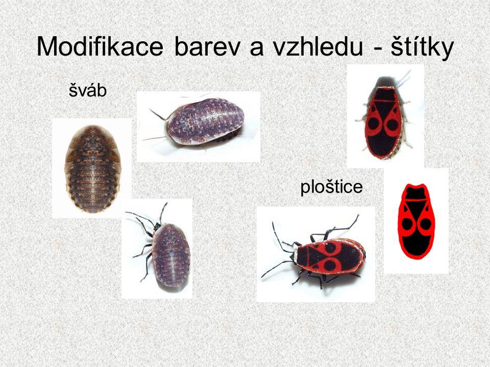 Modifikace barev a vzhledu - štítky šváb ploštice
