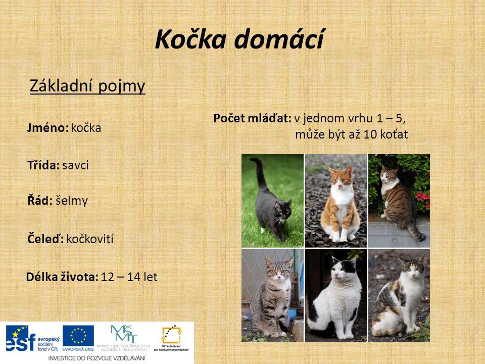 Kočka domácí Základní pojmy Jméno: kočka Třída: savci Řád: šelmy Čeleď: kočkovití Délka života: 12 – 14 let Počet mláďat: v jednom vrhu 1 – 5, může bý