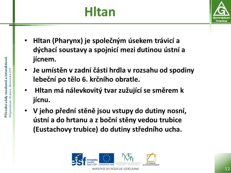 Přírodní vědy moderně a interaktivně ©Gymnázium Hranice, Zborovská 293 Hltan Hltan (Pharynx) je společným úsekem trávicí a dýchací soustavy a spojnicí