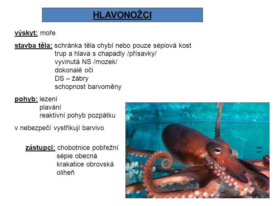 HLAVONOŽCI výskyt: moře stavba těla: schránka těla chybí nebo pouze sépiová kost trup a hlava s chapadly /přísavky/ vyvinutá NS /mozek/ dokonalé oči D