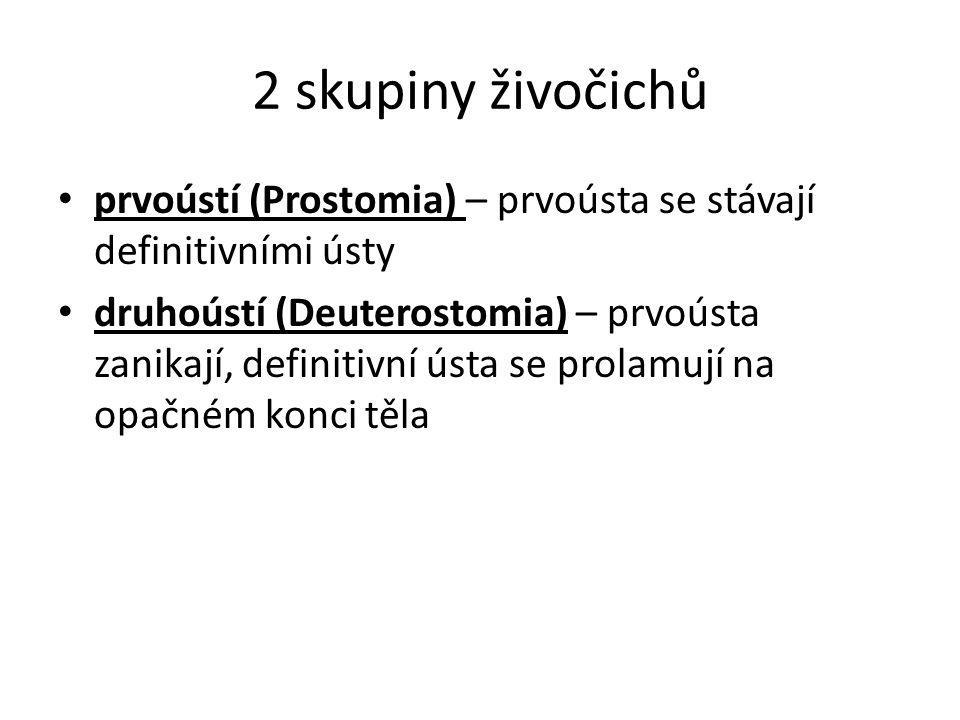 2 skupiny živočichů prvoústí (Prostomia) – prvoústa se stávají definitivními ústy druhoústí (Deuterostomia) – prvoústa zanikají, definitivní ústa se p
