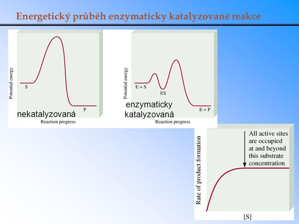 Energetický průběh enzymaticky katalyzované reakce nekatalyzovaná enzymaticky katalyzovaná