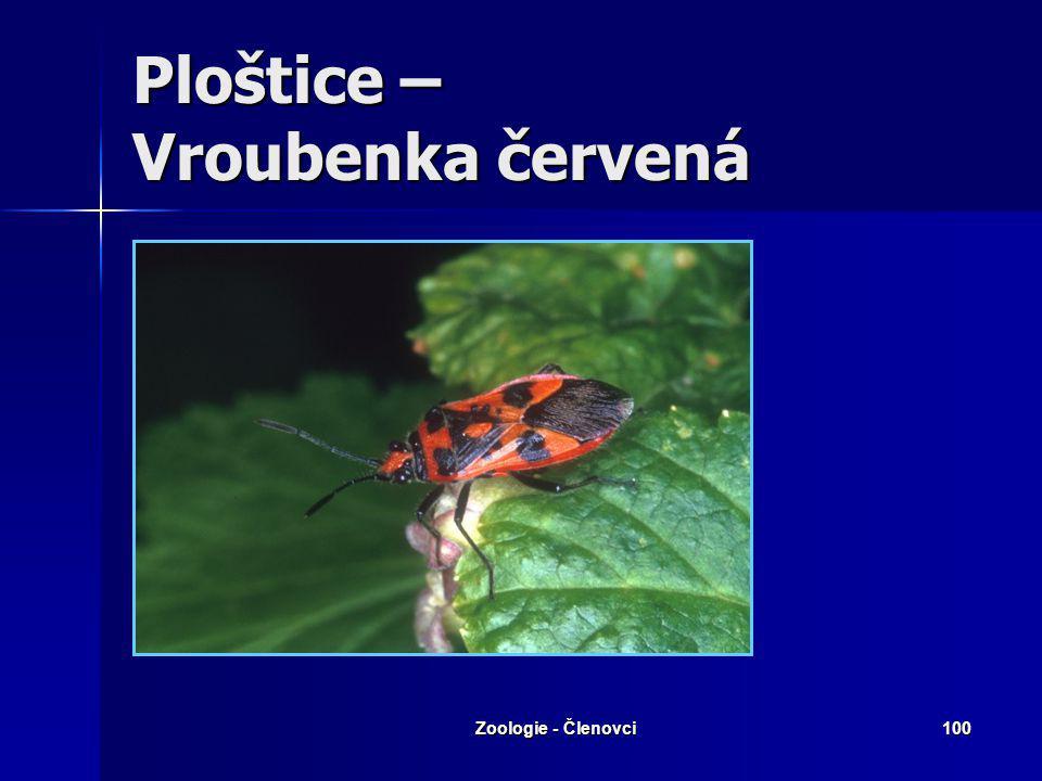 Zoologie - Členovci99 Ploštice – Splešťule blátivá