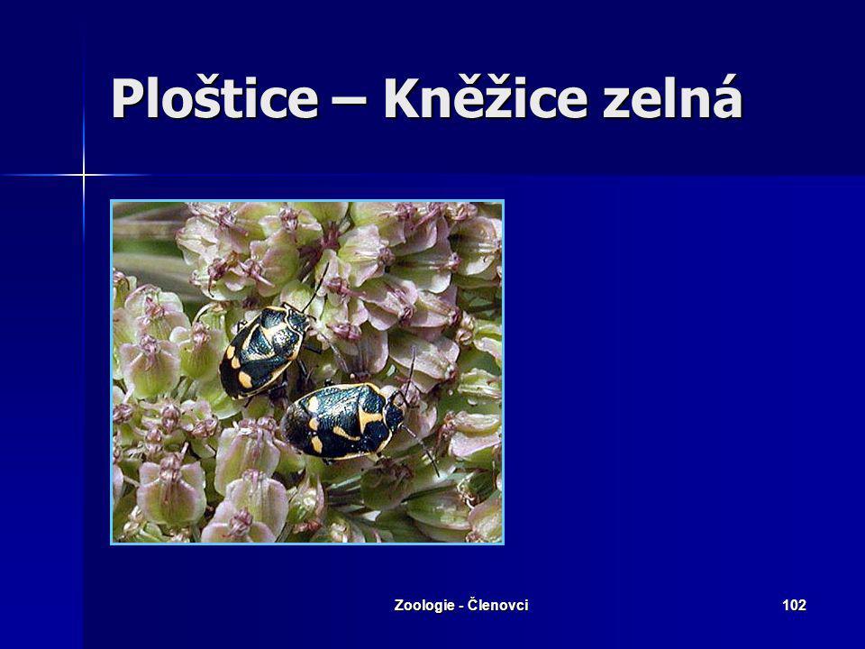Zoologie - Členovci101 Ploštice – Ruměnice pospolná