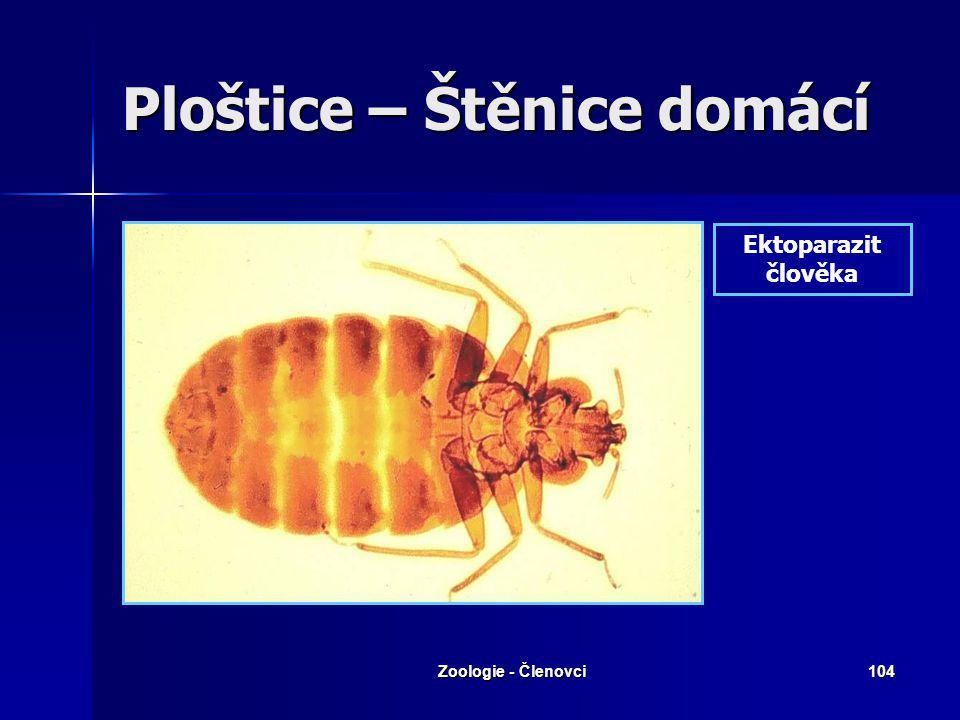 Zoologie - Členovci103 Ploštice – Štěnice domácí Ektoparazit člověka